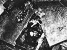 jessica-origliasso-623368.jpg