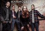 marmozets-502993.jpg